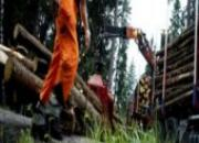 Grues forestières