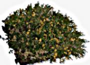 Inovgreen sedum
