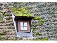 Etanchéité des toitures et traitement anti mousse