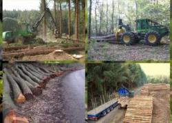 La pluie perturbe les approvisionnements en bois