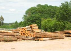 La filière forêt-bois en quête de financements