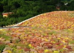 La toiture végétalisée, source de soucis juridiques