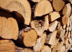 La filière bois va bénéficier de fonds supplémentaires