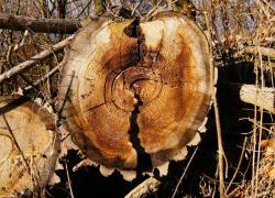 Le prix du bois progresse en 2016, tiré par le chêne et le pin Douglas