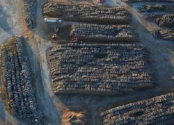 Uniper fait appel de l'annulation d'exploitation de sa centrale biomasse