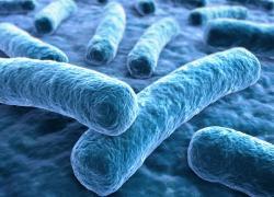 Une nouvelle plaque de plâtre élimine les microbes en plus des moisissures