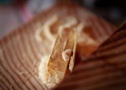 Bois : un nouveau traitement pour éradiquer les insectes à larves xylophages