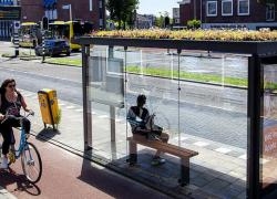 La ville d'Utrecht va verdir ou solariser toutes ses toitures