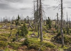Les ventes de bois menacées avec l'infestation de coléoptères