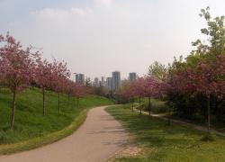 Architectes et urbanistes planchent sur la ville de rêve post-confinement