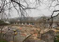 Bois : Il faut planter des arbres en ville pour compenser les coupes forestières