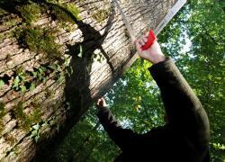 Révision de la certification forestière PEFC : interview de Paul-Emmanuel Huet