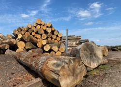La chine continue de siphonner la forêt française selon la profession