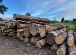 Exportation de bois en Chine : nouveau record et une aberration écologique pour la FNB