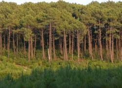 Gironde : débat public pour le projet du plus gros parc photovoltaïque de France