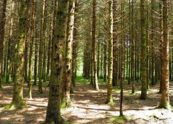 L'Office national des forêts veut soigner une forêt fragilisée par le dérèglement climatique