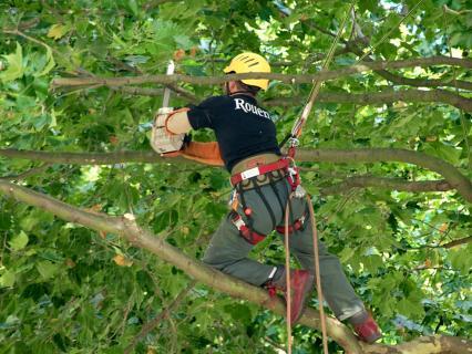 On ne peut faire couper que les branches d'un voisin immédiat