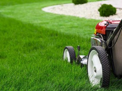 Comment bien entretenir sa pelouse