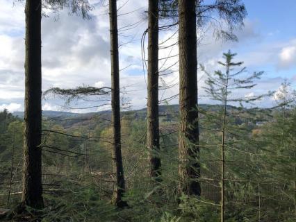 Le Douglas idéal pour les totems et le bois d'oeuvre du 21e siècle