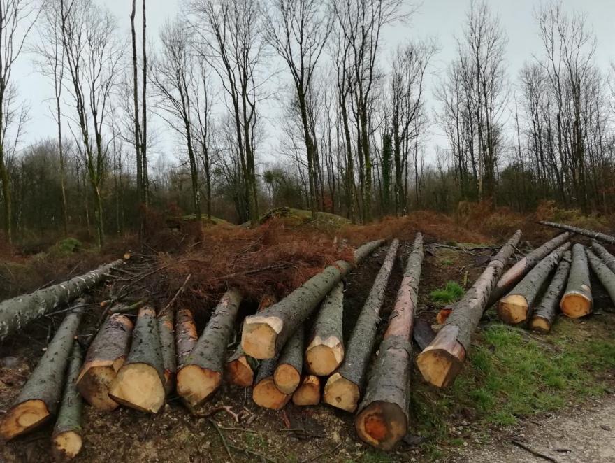 """Le gouvernement lance des assises pour apporter des """"réponses concrètes"""" à la filière bois"""