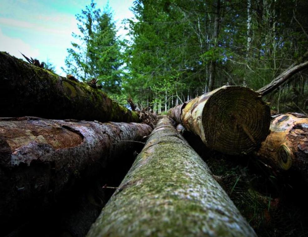 Isover prêt à investir le marché de la construction bois