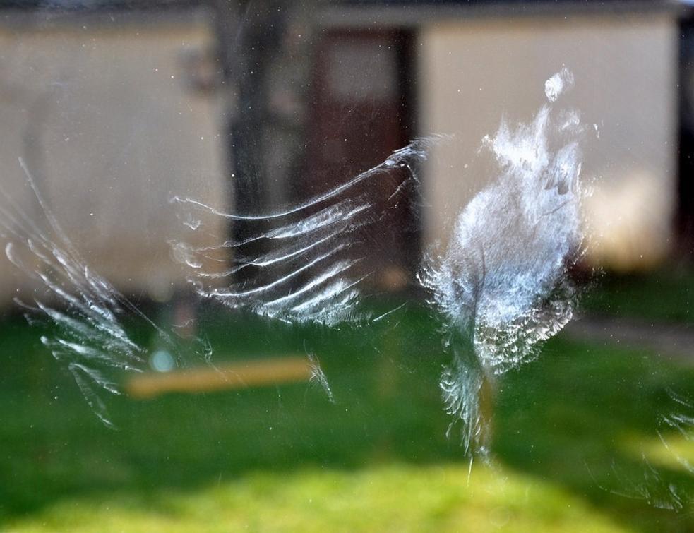 Alerte aux collisions d'oiseaux contre les façades vitrées