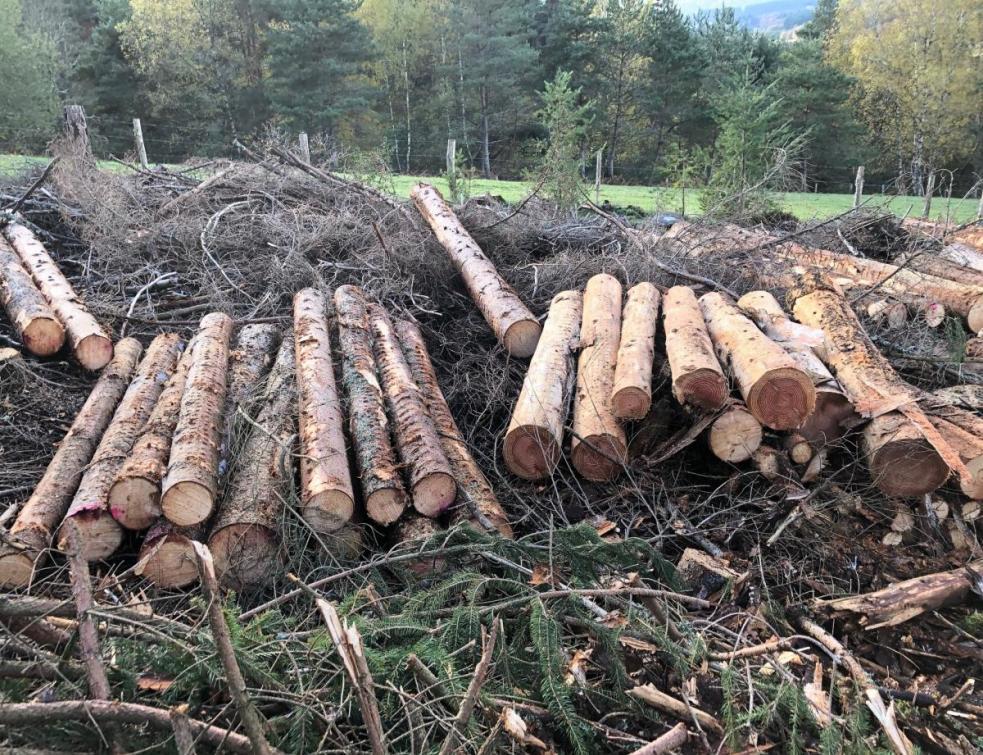 La filière bois dévoile enfin ses chiffres complets