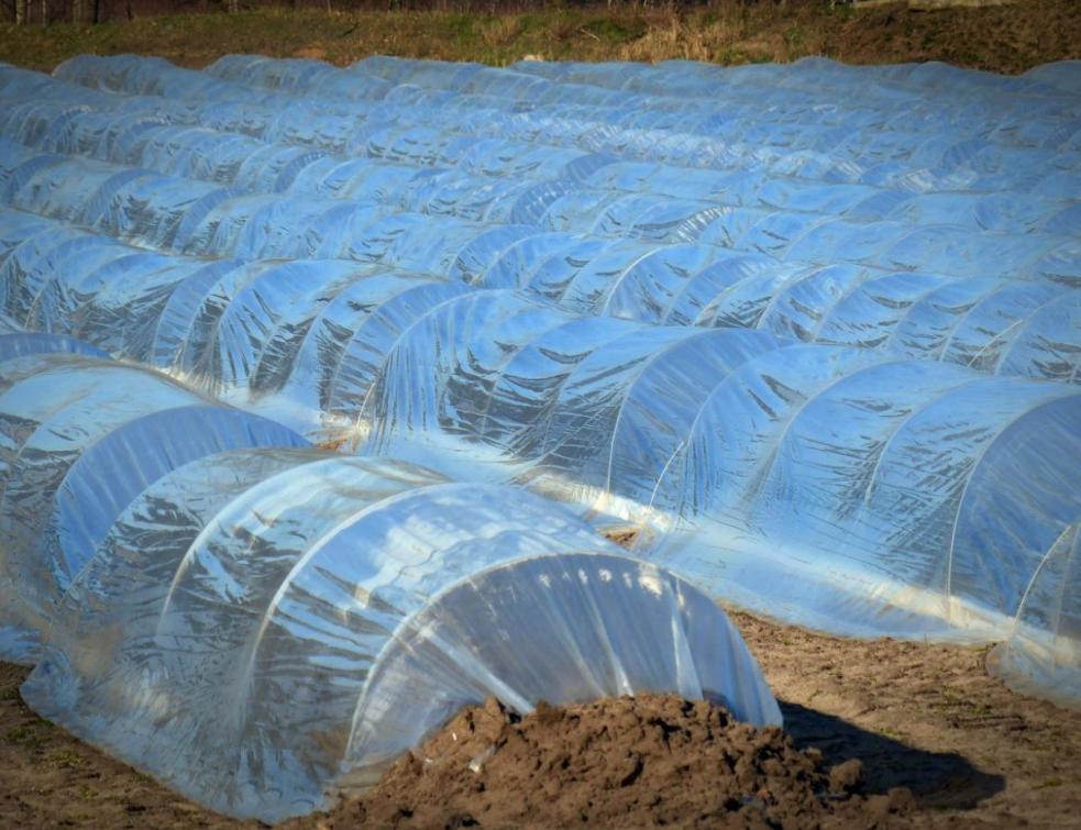 Covid-19: Action Logement versera une aide aux saisonniers agricoles