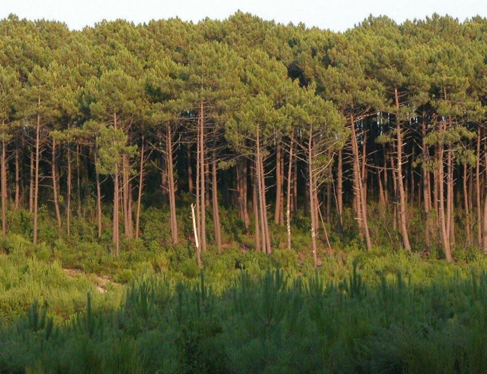 Feu de forêt en Gironde, environ 250 hectares détruits
