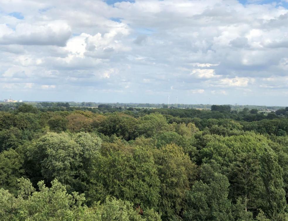 Le rapport Cattelot propose une réforme de la forêt saluée par la profession