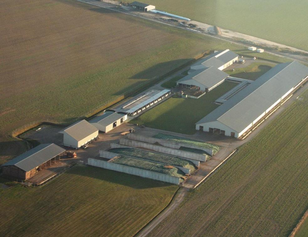 Un feu vert de la justice relance un projet de ferme de 1.200 bovins