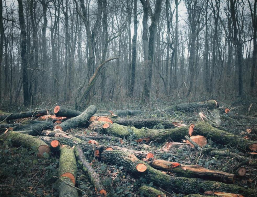 Décarboner le bâtiment: la filière bois réclame des moyens pour être plus compétitive