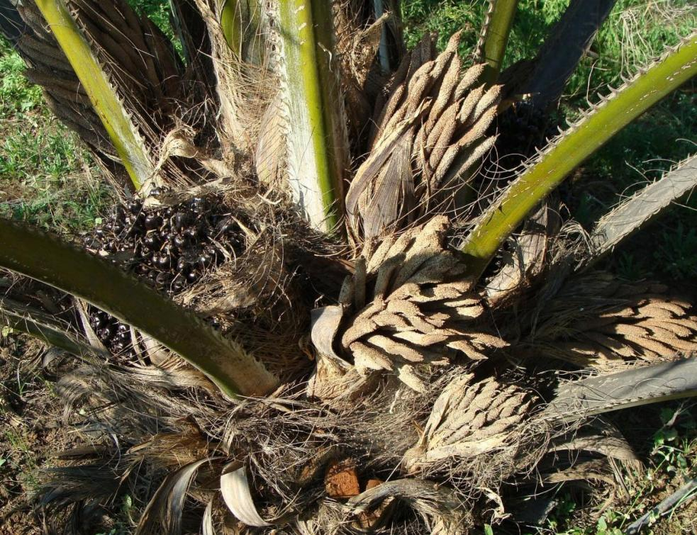 TotalEnergies n'utilisera plus d'huile de palme à partir de 2023